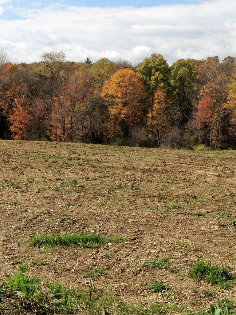 Blue Sky Motors >> 79 Acres- Sandy Township, Clearfield County, PA (West Liberty) - Blue Sky Real Estate