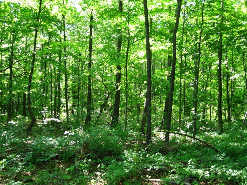 19.54 Acres- Huston Township, Clearfield Co., PA (Penfield ...